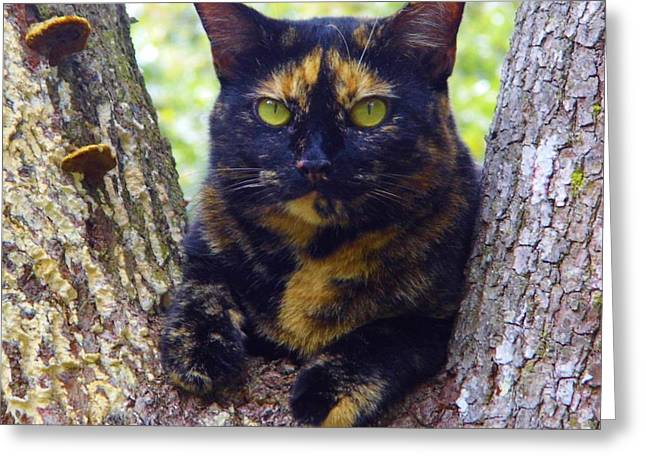 Kitten Prints Greeting Cards - My Calico Girl Greeting Card by D Hackett