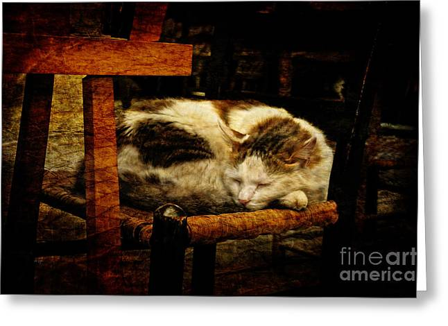 Cat Sleeping Greeting Cards - Calico Greeting Card by Lois Bryan
