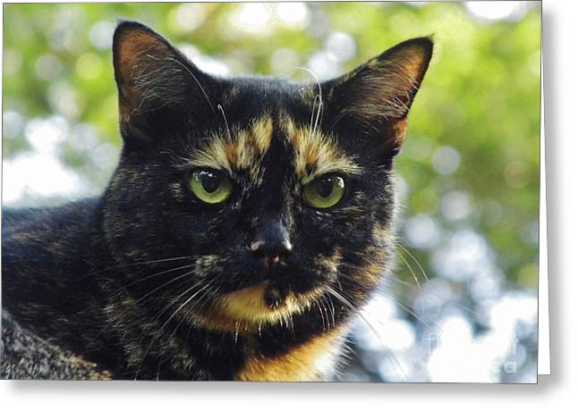 House Pet Greeting Cards - Calico Smile Greeting Card by D Hackett