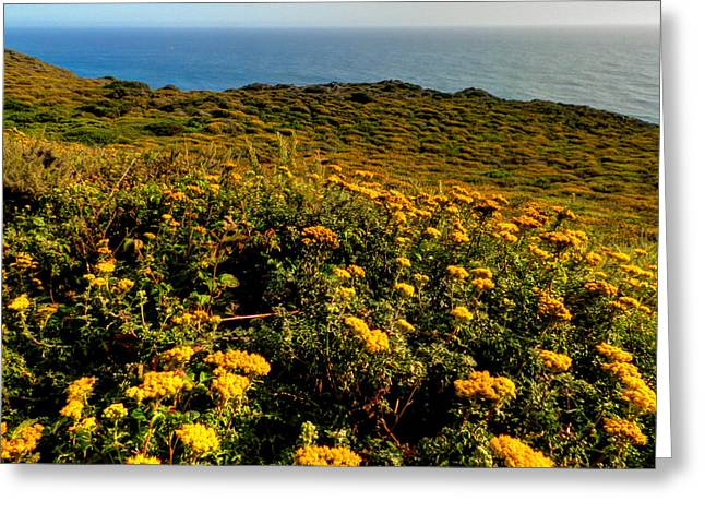 Santa Lucia Mountains Greeting Cards - California - Big Sur 007 Greeting Card by Lance Vaughn