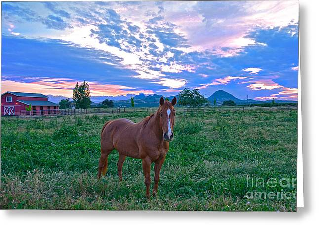 California Horse   Greeting Card by Michelle Zearfoss