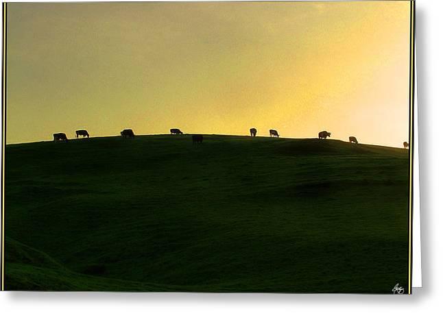 Rte 1 Greeting Cards - California Coast Cows at Sunset Greeting Card by Wayne King