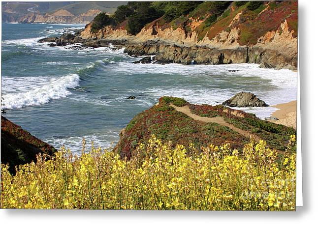 Flowers Along The California Coast Greeting Cards - California Coast Overlook Greeting Card by Carol Groenen