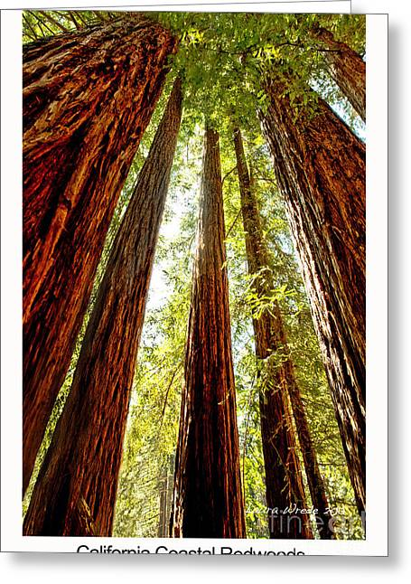 Sempervirons Greeting Cards - California Coastal Redwoods Greeting Card by Artist and Photographer Laura Wrede