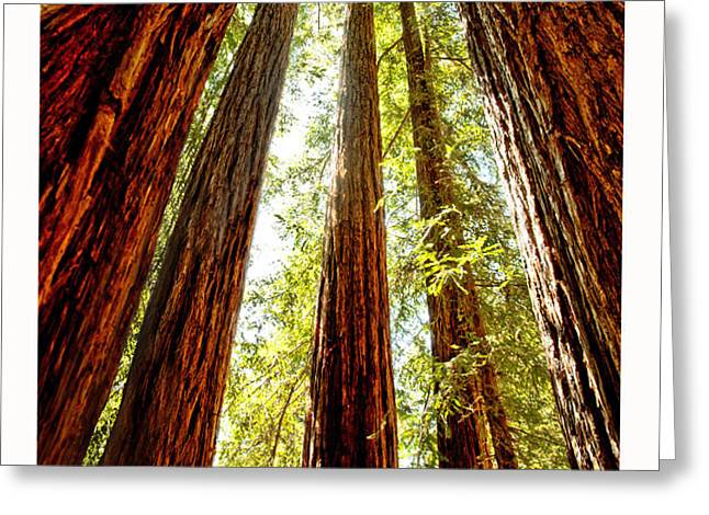 California Coastal Redwoods Greeting Card by Artist and Photographer Laura Wrede