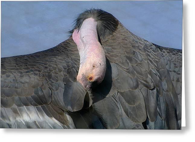Condor Greeting Cards - California Condor Greeting Card by Fraida Gutovich