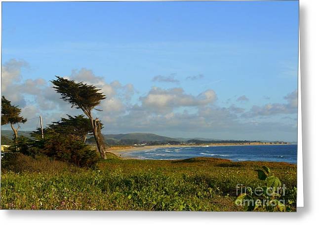 Half Moon Bay Greeting Cards - California Dreaming Greeting Card by Avis  Noelle