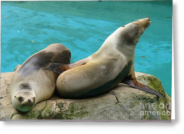 California Sea Lions Greeting Cards - California Dreaming Greeting Card by Lingfai Leung