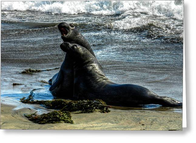 Elephant Seals Greeting Cards - California - Elephant Seals of Big Sur 006 Greeting Card by Lance Vaughn