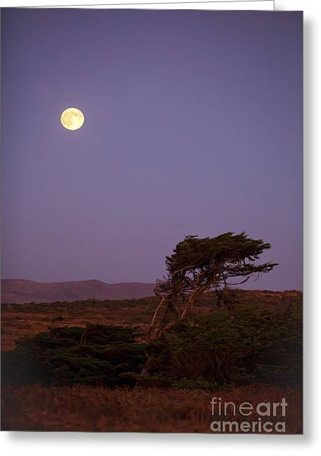Bodega Greeting Cards - California Moon Greeting Card by Diane Diederich