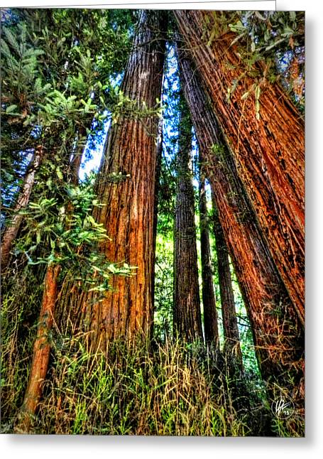 Golden Gate National Recreation Area Greeting Cards - California - Muir Woods 001 Greeting Card by Lance Vaughn