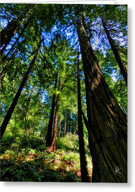 Golden Gate National Recreation Area Greeting Cards - California - Muir Woods 004 Greeting Card by Lance Vaughn