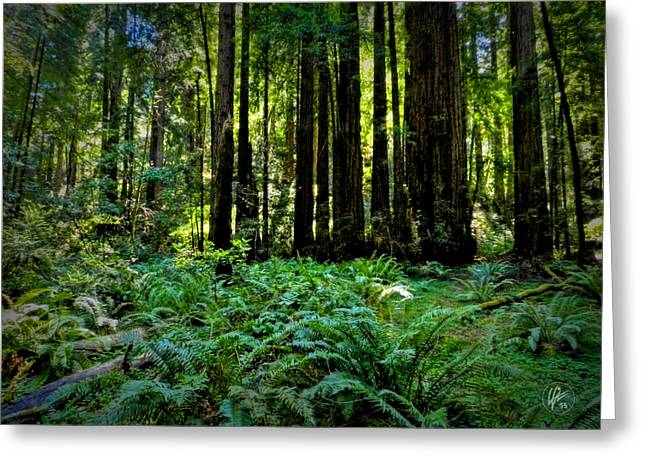 Golden Gate National Recreation Area Greeting Cards - California - Muir Woods 007 Greeting Card by Lance Vaughn