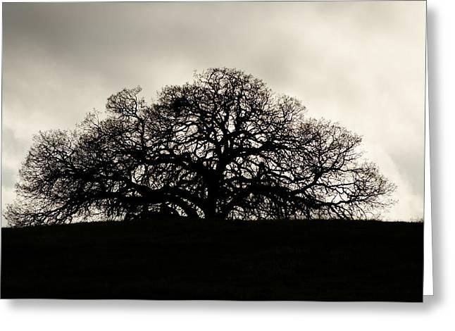 Atascadero Greeting Cards - California Oak Greeting Card by Darin Volpe