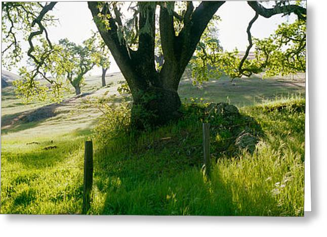 Central Coast Greeting Cards - California Oaks Trees, Central Coast Greeting Card by Panoramic Images