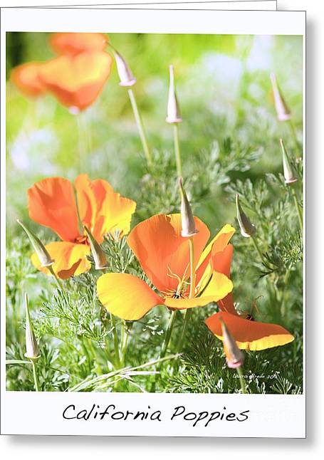 California Poppies Greeting Card by Artist and Photographer Laura Wrede