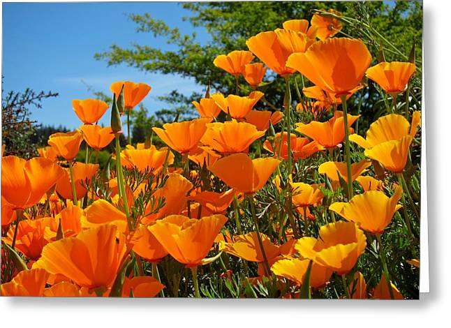 Recently Sold -  - Cushion Greeting Cards - California Poppies Greeting Card by Lena Kouneva