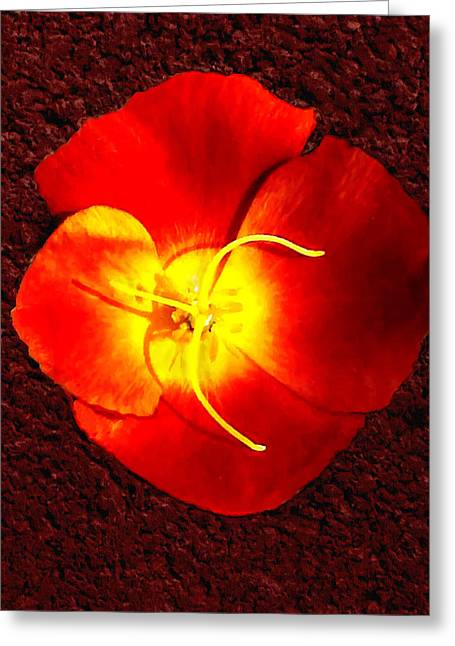 Fineartamerica Greeting Cards - California Poppy by Nadine Johnston Greeting Card by  Bob and Nadine Johnston