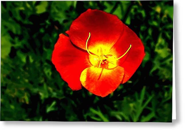 Stamen Digital Greeting Cards - California Poppy Greeting Card by  Bob and Nadine Johnston
