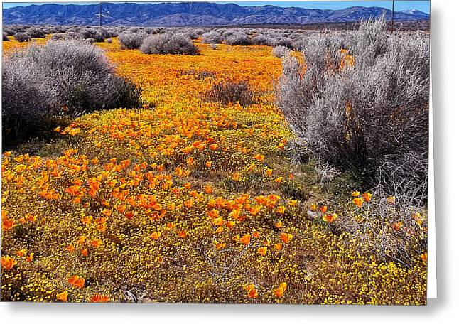 Patch Greeting Cards - California Poppy Patch Greeting Card by Glenn McCarthy Art and Photography