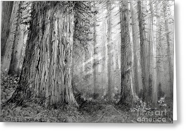 Jim Hubbard Greeting Cards - California Redwood Greeting Card by Jim Hubbard