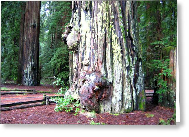 Lichen Photo Greeting Cards - California Redwoods 4 Greeting Card by Will Borden