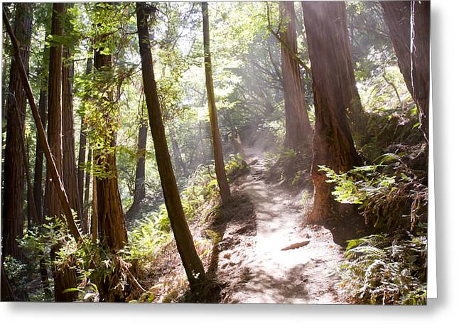 Brandon Smith Greeting Cards - California redwoods in the sunlight Greeting Card by Brandon Smith