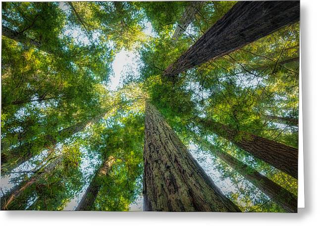 Species: S. Sempervirens Greeting Cards - California Redwoods Greeting Card by Rich Leighton