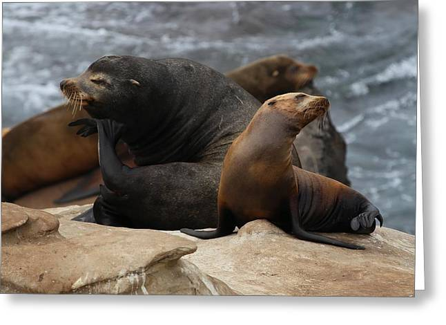 California Sea Lions Greeting Cards - California Sea Lion 20130314 Greeting Card by Rob Bielawski