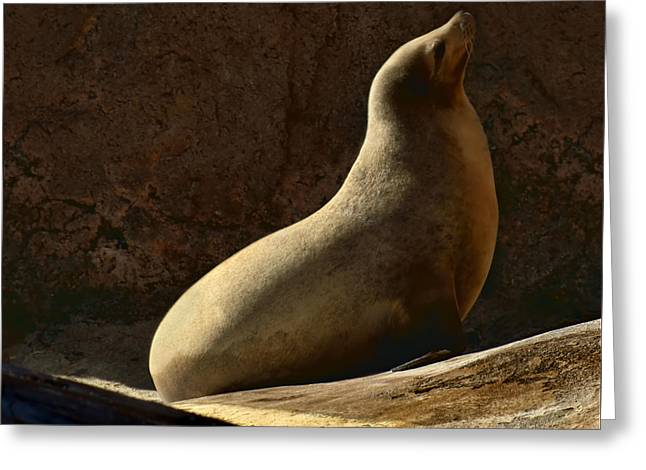 California Sea Lions Greeting Cards - California Sea Lion -Basking Greeting Card by Nikolyn McDonald