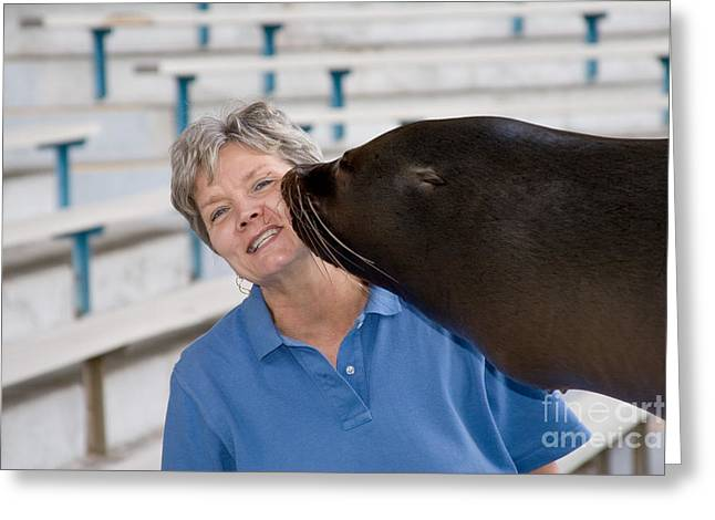California Sea Lion Giving A Kiss Greeting Card by Gregory G. Dimijian