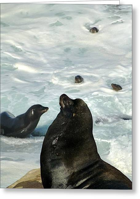 California Sea Lions Greeting Cards - California Sea Lions  At High Tide Greeting Card by Amelia Racca