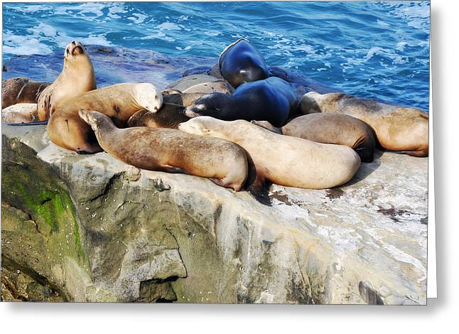 California Sea Lions Greeting Cards - California Sea Lions in La Jolla II Greeting Card by Kyle Hanson