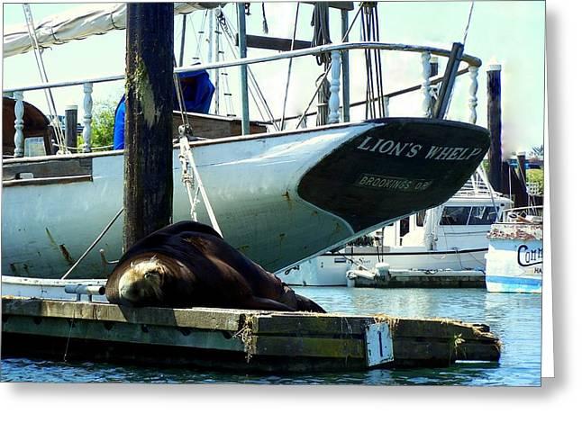California Sea Lions Greeting Cards - California Sea - Lions Whelp Greeting Card by Kristal Talbot