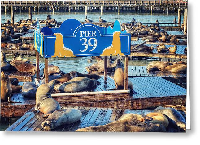 California Sea Lions Greeting Cards - California seal lions on Pier 39 - San Francisco  Greeting Card by The  Vault - Jennifer Rondinelli Reilly