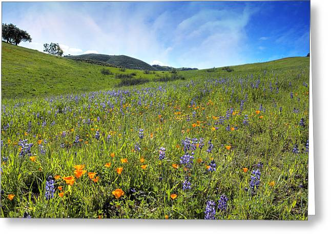 Ventura California Greeting Cards - California Spring Wildflowers Greeting Card by Lynn Bauer