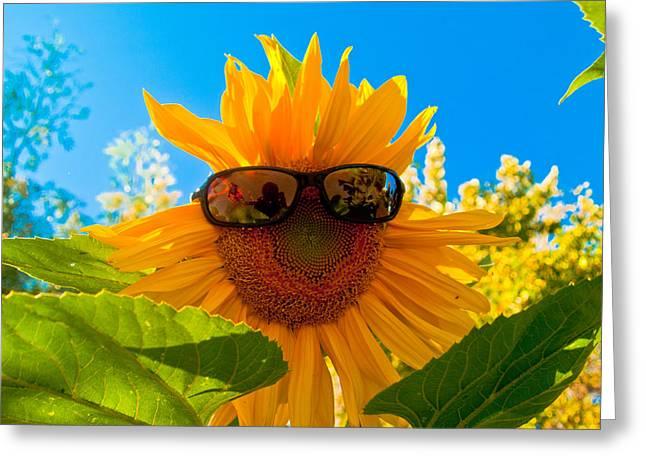 California Sunflower Greeting Card by Bill Gallagher