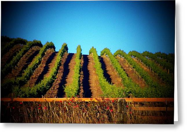 Sonoma County Vineyards. Greeting Cards - California Vineyard Greeting Card by Joyce Kimble Smith