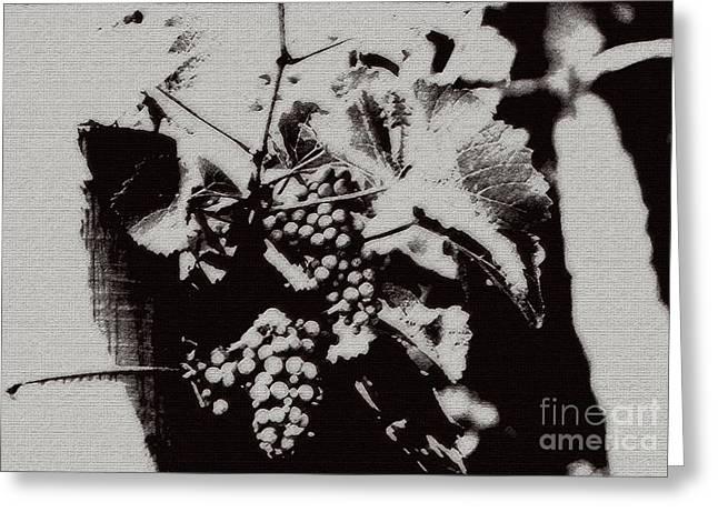 California Vineyard Greeting Card by Linda Knorr Shafer