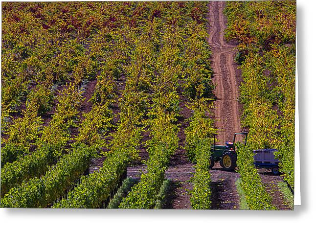 Ripe Grapes Greeting Cards - California Vineyards Greeting Card by Garry Gay