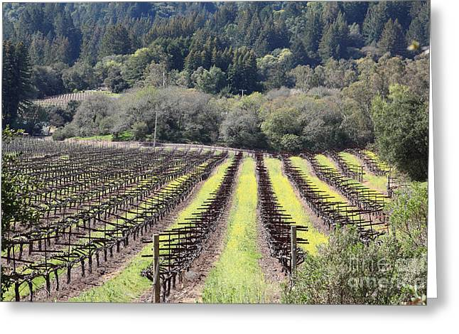 Sonoma County Vineyards. Greeting Cards - California Vineyards In Late Winter Just Before The Bloom 5D22051 Greeting Card by Wingsdomain Art and Photography