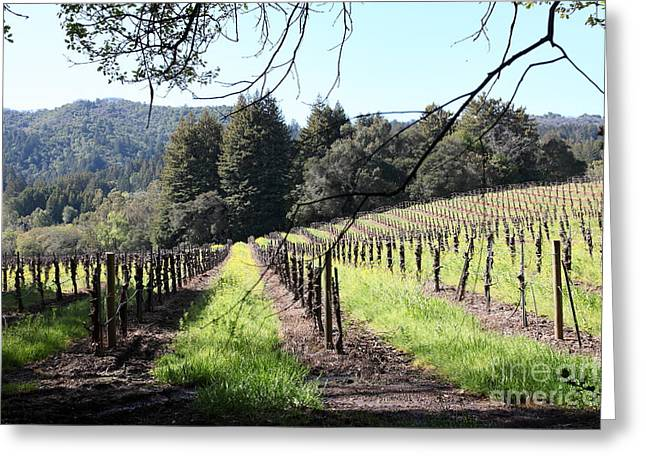 Sonoma County Vineyards. Greeting Cards - California Vineyards In Late Winter Just Before The Bloom 5D22053 Greeting Card by Wingsdomain Art and Photography