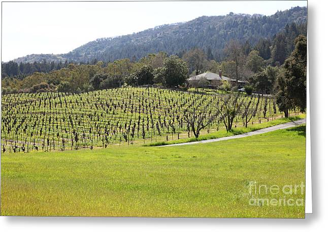 Sonoma County Vineyards. Greeting Cards - California Vineyards In Late Winter Just Before The Bloom 5D22073 Greeting Card by Wingsdomain Art and Photography