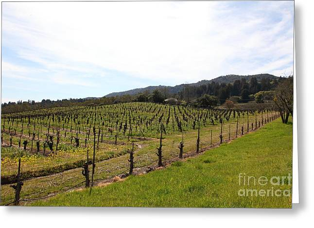 California Vineyards In Late Winter Just Before The Bloom 5D22114 Greeting Card by Wingsdomain Art and Photography