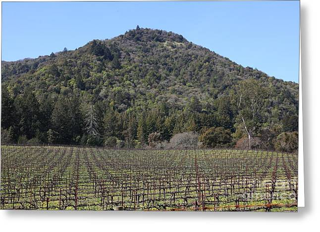 California Vineyards In Late Winter Just Before The Bloom 5D22142 Greeting Card by Wingsdomain Art and Photography