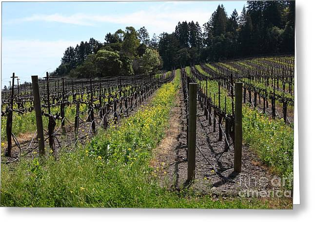 Sonoma County Greeting Cards - California Vineyards In Late Winter Just Before The Bloom 5D22166 Greeting Card by Wingsdomain Art and Photography