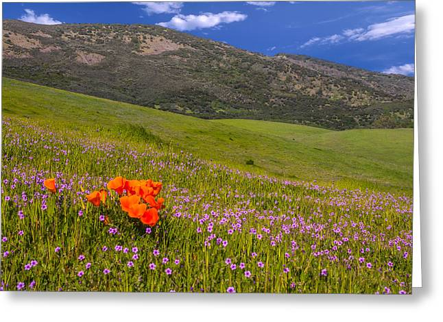 Bay Area Flowers Greeting Cards - California Wildflowers Greeting Card by Marc Crumpler