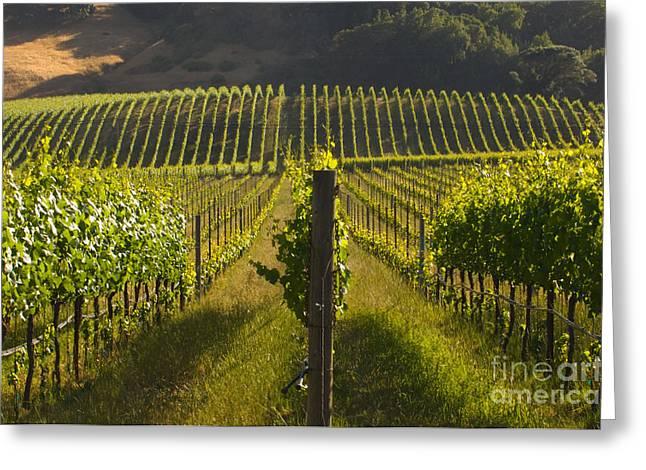 Grape Leaf Greeting Cards - California Wine Grape Vineyard Greeting Card by Ron Sanford