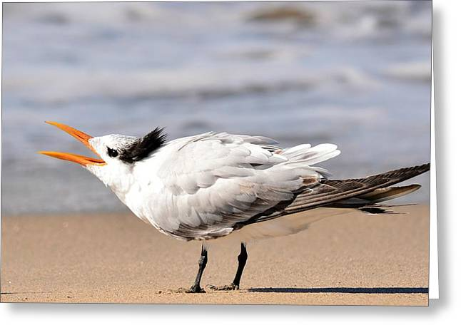 Tern Greeting Cards - Call Of The Tern Greeting Card by Fraida Gutovich