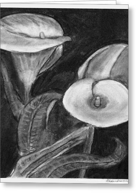 Calla Lily Drawings Greeting Cards - Calla Lilies Greeting Card by Alexandra Herr